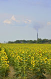 Sonnenblume-Industrie lizenzfreie stockfotos