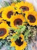 Sonnenblume lassen mich wie Sonnenschein lächeln stockfotografie