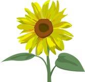 Sonnenblume mit Blättern Stockfotos