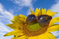 Sonnenblume mit Gläsern stockfoto