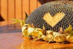 Sonnenblume mit Liebeszeichen Stockfotos
