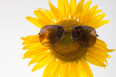 Sonnenblume-tragende Sonnenbrille Stockfoto