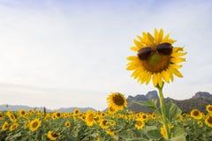 Sonnenblume-tragende Sonnenbrille Stockbilder