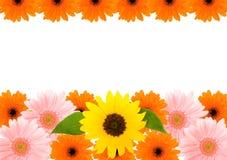 Sonnenblume- und Barbertongänseblümchenfeld Lizenzfreie Stockfotos