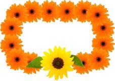 Sonnenblume- und Barbertongänseblümchenfeld Lizenzfreies Stockfoto