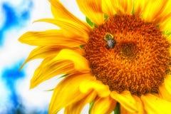 Sonnenblume und Biene Lizenzfreies Stockfoto