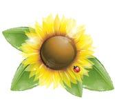 Sonnenblume- und Grünblätter getrennt auf Weiß Stockfotos