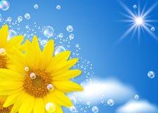Sonnenblume und Luftblasen Lizenzfreies Stockfoto