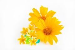 Sonnenblume und Plumeria lizenzfreies stockbild
