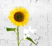 Sonnenblume und Puzzlespiel, Geschäftsagronomiekonzeption lizenzfreies stockbild
