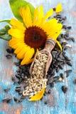 Sonnenblume und Sonnenblumensamen lizenzfreie stockfotos
