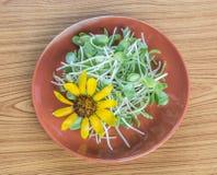 Sonnenblume und Sprösslinge Stockfotos