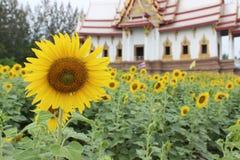 Sonnenblume und Tempel stockfotografie