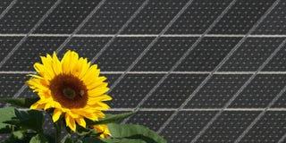 Sonnenblume vor Sonnenkollektoren stockbild