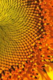 Sonnenblumebeschaffenheit Stockfotografie