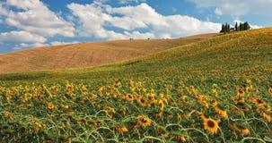 Sonnenblumefeld über Hügel. Lizenzfreie Stockfotografie