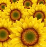 Sonnenblumehintergrund vektor abbildung