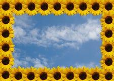 Sonnenblumefeld auf Himmel Lizenzfreie Stockfotos