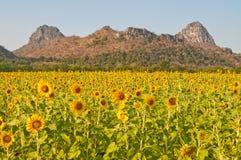 Sonnenblumefeld mit Berg Lizenzfreie Stockfotos