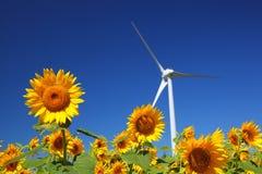 Sonnenblumefeld mit Windmühle Stockfotos