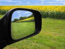 Sonnenblumefeld reflektiert im Spiegel des seitlichen Autos Stockfotografie