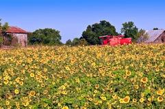 Sonnenblumefeld und -maschinerie Lizenzfreie Stockbilder