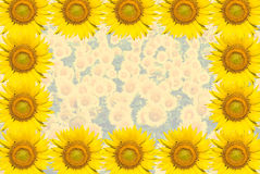 Sonnenblumehintergrund Stockfotografie