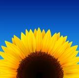 Sonnenblumehintergrund stock abbildung