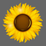 Sonnenblumeillustrations-Hintergrundillustration Lizenzfreie Stockbilder