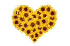 Sonnenblumeinneres. Lizenzfreie Stockbilder