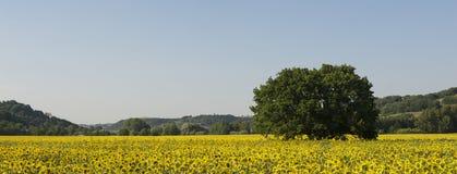 Sonnenblumelandschaft Lizenzfreie Stockbilder