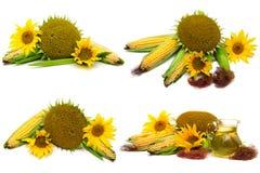 Sonnenblumenöl, Sonnenblume und Maiskörner lokalisiert auf weißem b lizenzfreie stockfotos