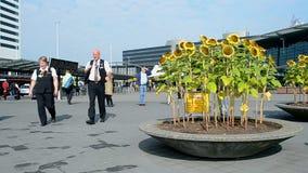 Sonnenblumen in Amsterdam-Flughafen Schiphol, die Niederlande, stock video