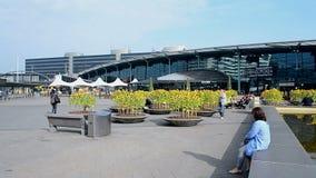 Sonnenblumen in Amsterdam-Flughafen Schiphol, die Niederlande stock video footage