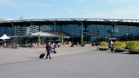 Sonnenblumen in Amsterdam-Flughafen Schiphol, die Niederlande stock video