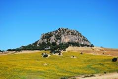 Sonnenblumefeld, Andalusien, Spanien. Stockfotografie