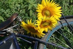 Sonnenblumen auf Fahrradgepäckzahnstange Stockfoto
