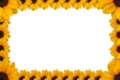 Sonnenblumen-Darstellungs-Schablone Stockfoto