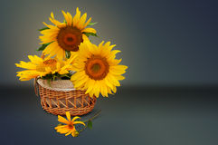 Sonnenblumen in einem Korb Stockfoto