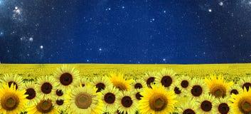 Sonnenblumen fangen nachts auf Lizenzfreie Stockbilder