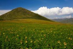 Sonnenblumen-Hügel Lizenzfreie Stockbilder