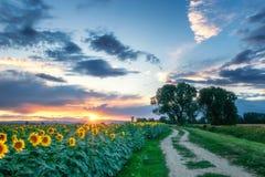 Sonnenblumen mit Bäumen im Sonnenuntergang lizenzfreies stockbild