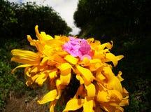 Sonnenblumen mit einem dunklen Gartenhintergrund lizenzfreies stockfoto