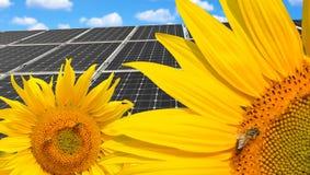 Sonnenblumen mit Solarenergieplatten Lizenzfreies Stockfoto