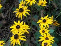 Sonnenblumen in New York Stockbild