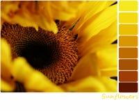 Sonnenblumen-Palette Stockbilder