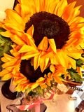 Sonnenblumen-Schönheit Lizenzfreie Stockfotografie