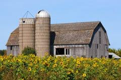 Sonnenblumen-Scheune Lizenzfreies Stockfoto