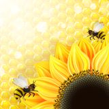 Sonnenblumen und Bienen über Bienenwaben vektor abbildung
