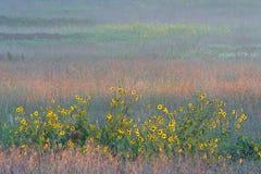 Sonnenblumen und buntes hohes Grasgrasland Lizenzfreies Stockfoto